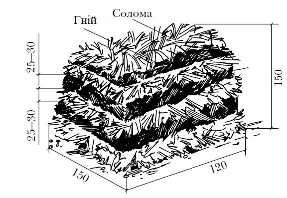 технологія вирощування шампіньйонів