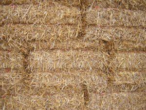 straw_texture1896