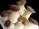 вешенка королівська,білий степний гриб,вешенка степная
